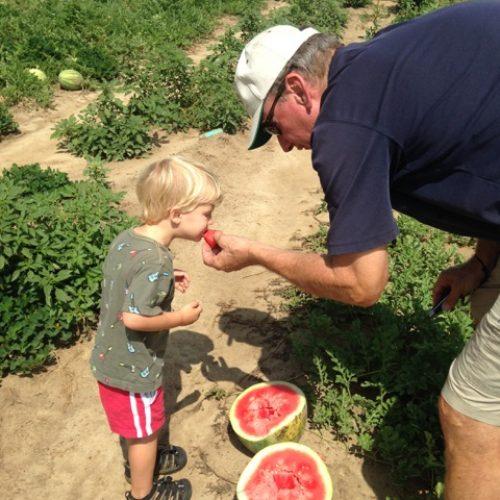 on the watermelon farm